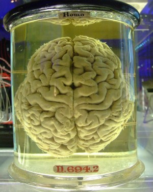 Human Brain in a Vat